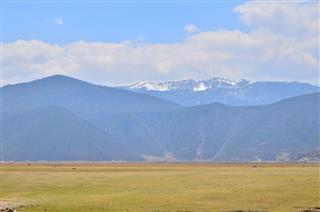 Grassland Savanna Landscape
