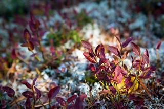 Moss In Tundra