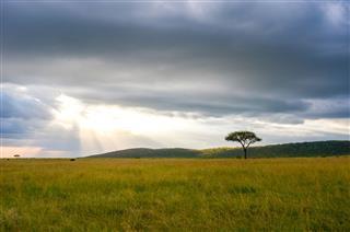 Landscape Masai Mara Kenya Africa