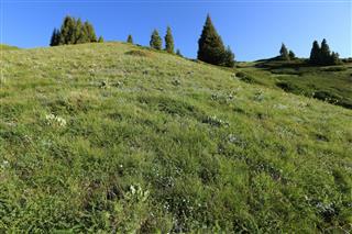 Green Grassland On Mountain Peak
