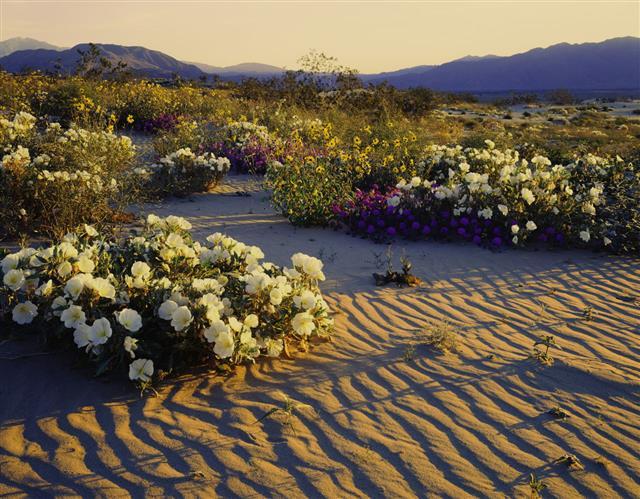 California Desert