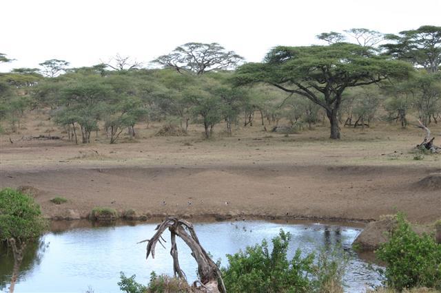 Waterhole In Serengeti Tanzania Africa