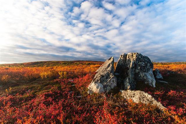 Tundra Fall Colors