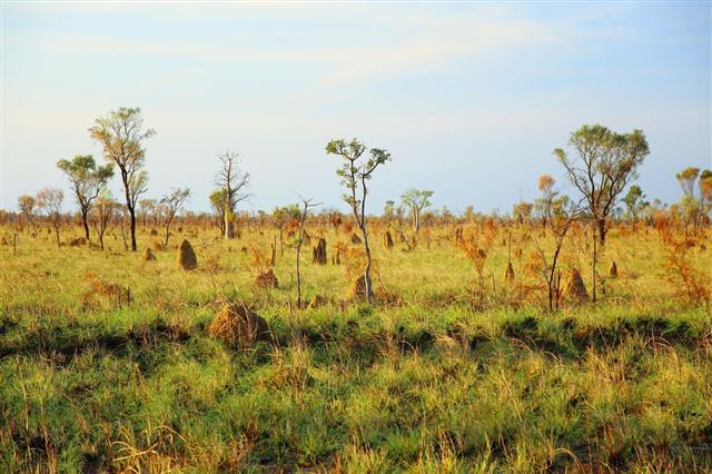 Termite Landscape In Australia