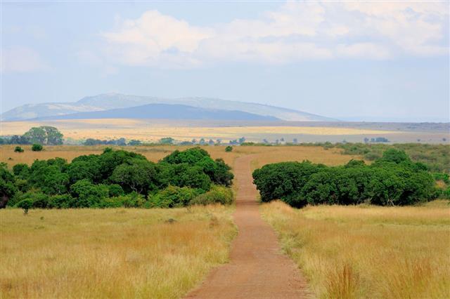 Savannah Landscape In Kenya