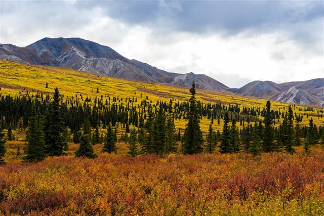 Tundra In Denali State Park