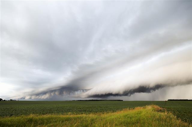 Shelf Cloud Over Soybean Field