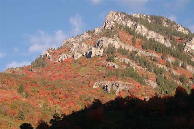 Rocky Mountain In Logan Canyon