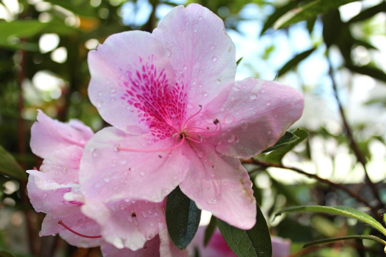Gardeners Delight Flowering Bushes Shrubs And Trees