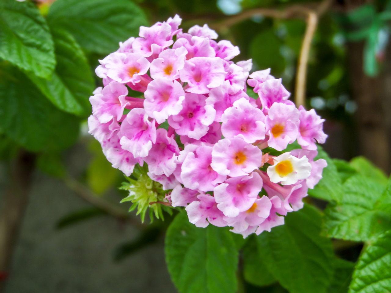 Flowering Plants Vs. Non-flowering Plants