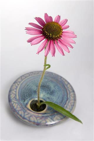 Cone Flower In Vase