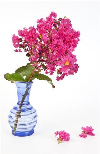 Crepe In A Vase