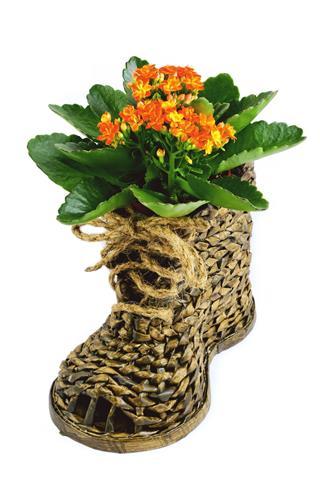 Wicker Shoe And Kalanchoe Flower