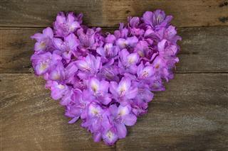 Pink Azalea Blossom Heart On Wood