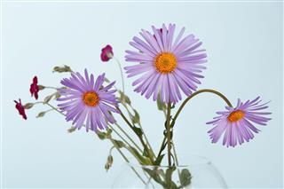 Aster Flower Bouquet