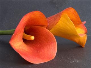 Lilies On Slate