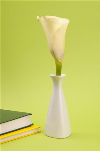 Calla Lily In Vase