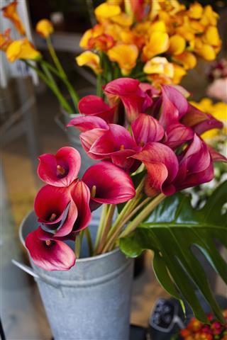Lilies Paris Flower Market