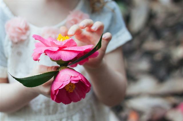Little Girl Holding Camellia Blossom