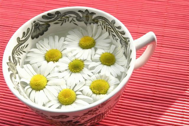 Herbal Tea Chamomile