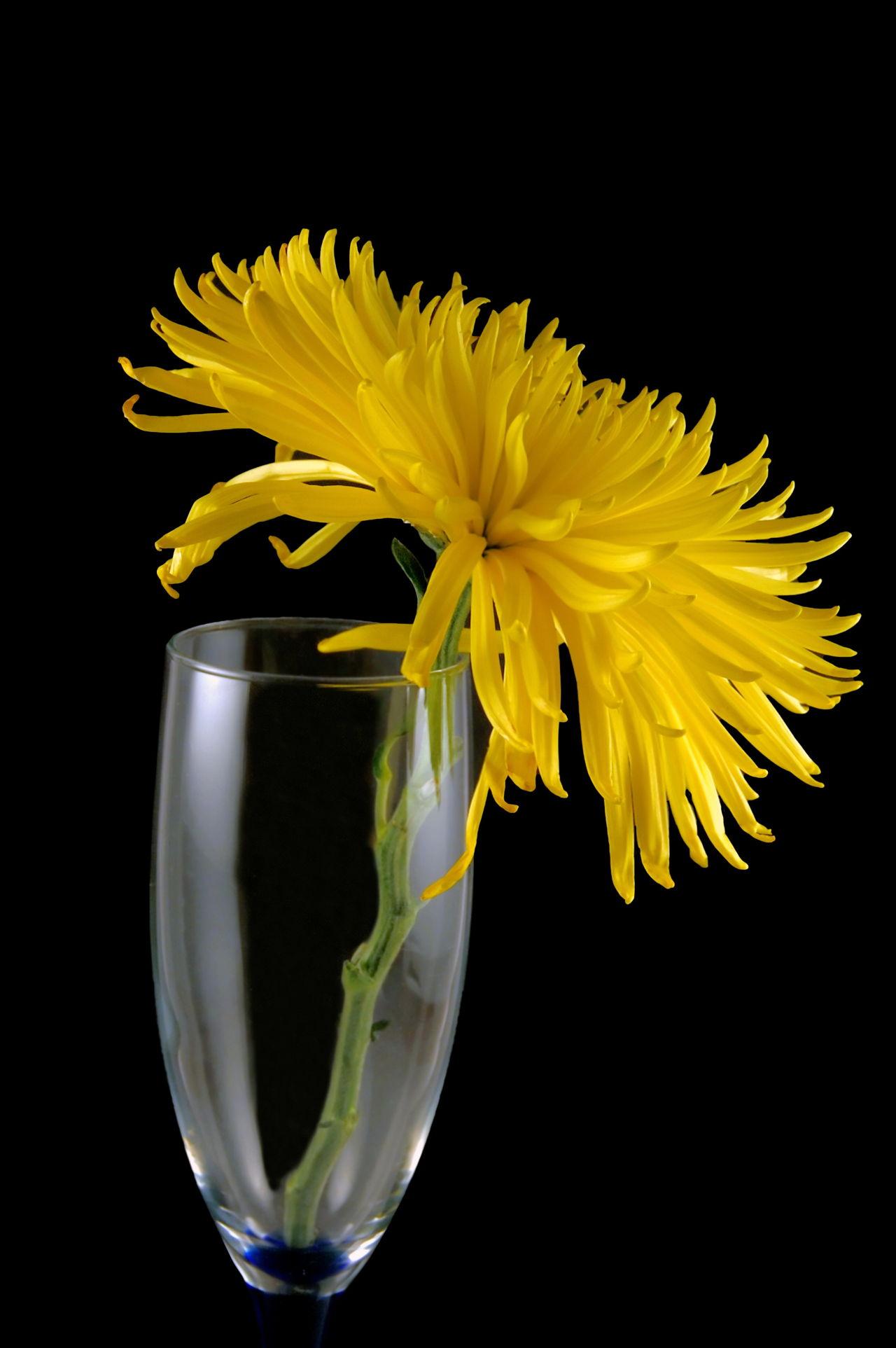 Chrysanthemum Tea Side Effects