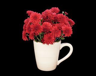 Red Chrysanthemum Flowers In Cup