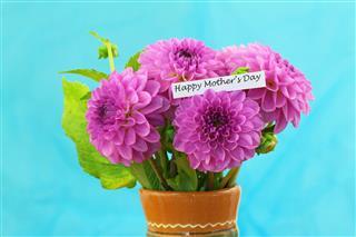 Pink Dahlia Flowers In Vase