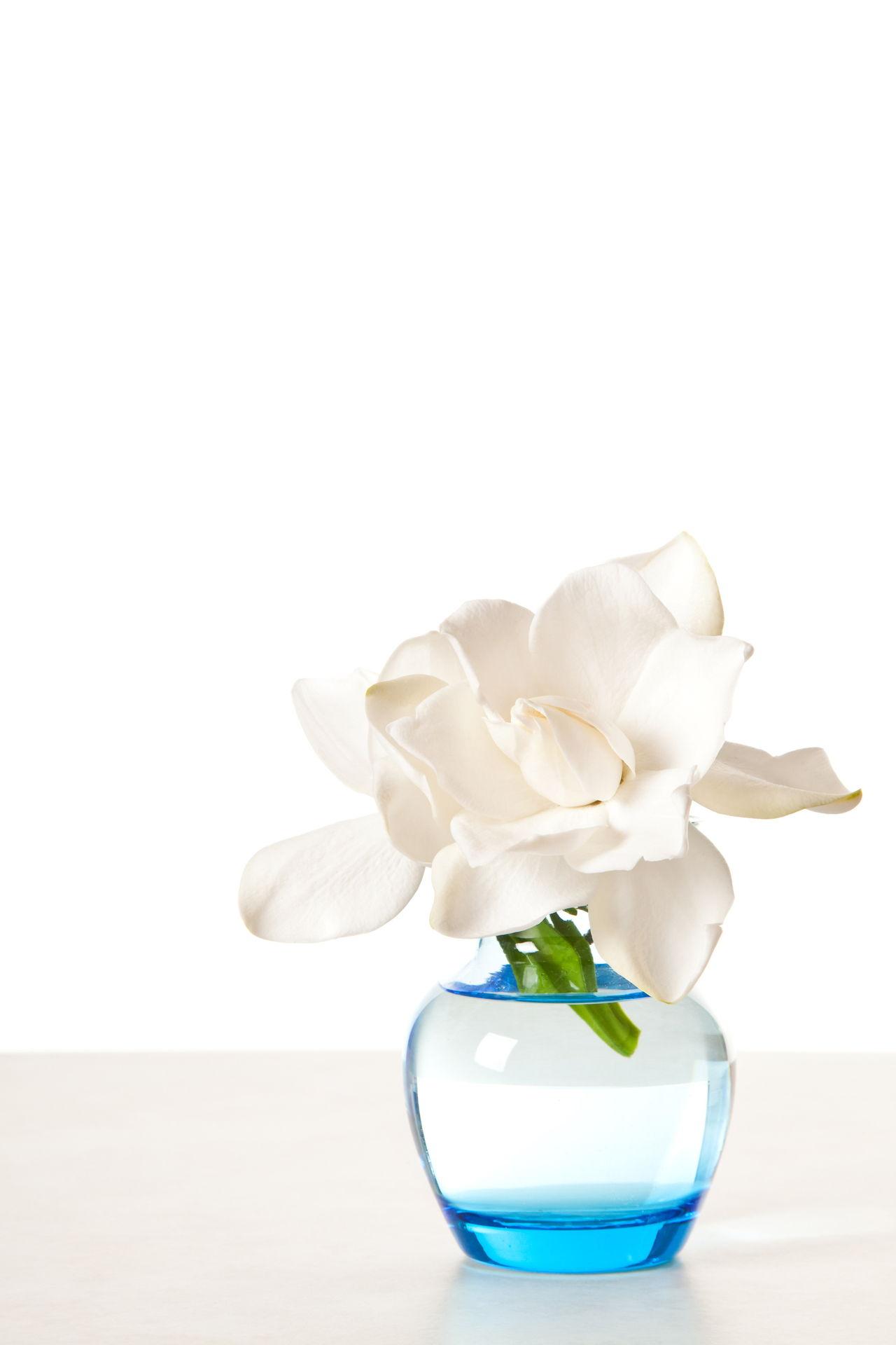 The symbolic meaning of gardenia flowers you always wished to know white gardenia blossom mightylinksfo