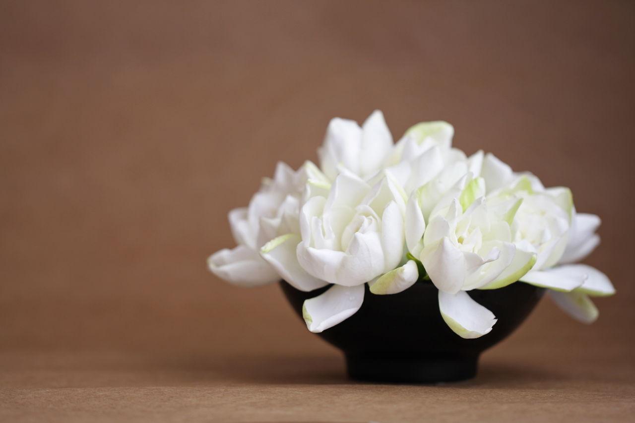 The spotless frostproof gardenia a fast growing flowering shrub gardenia flowers in a black vase mightylinksfo