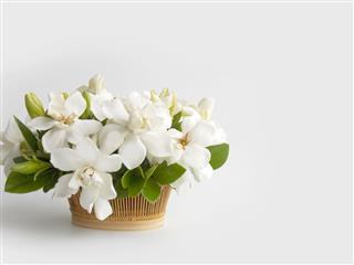 Gardenia Flower Bouquet