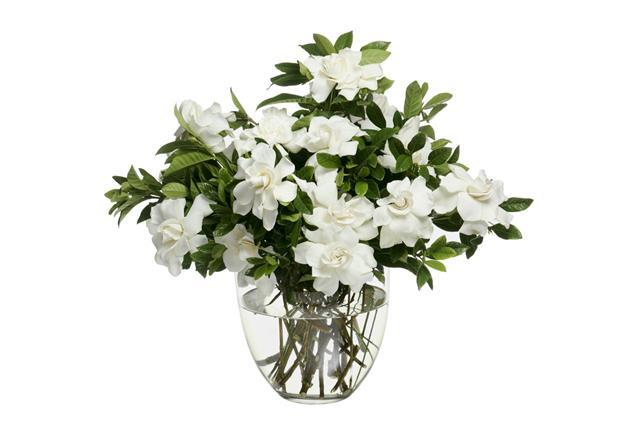 Bouquet Of Gardenias