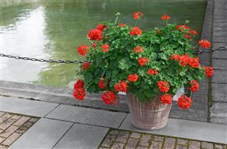Jade Plant Pruning Tips