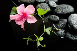 Delicate Pink Hibiscus Green
