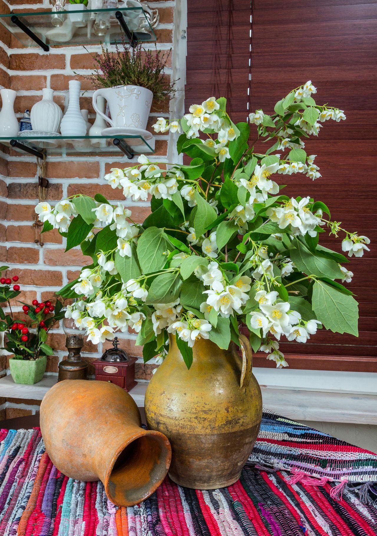 Jasmine plant care learn how to properly grow a jasmine bush jasmine flowers izmirmasajfo