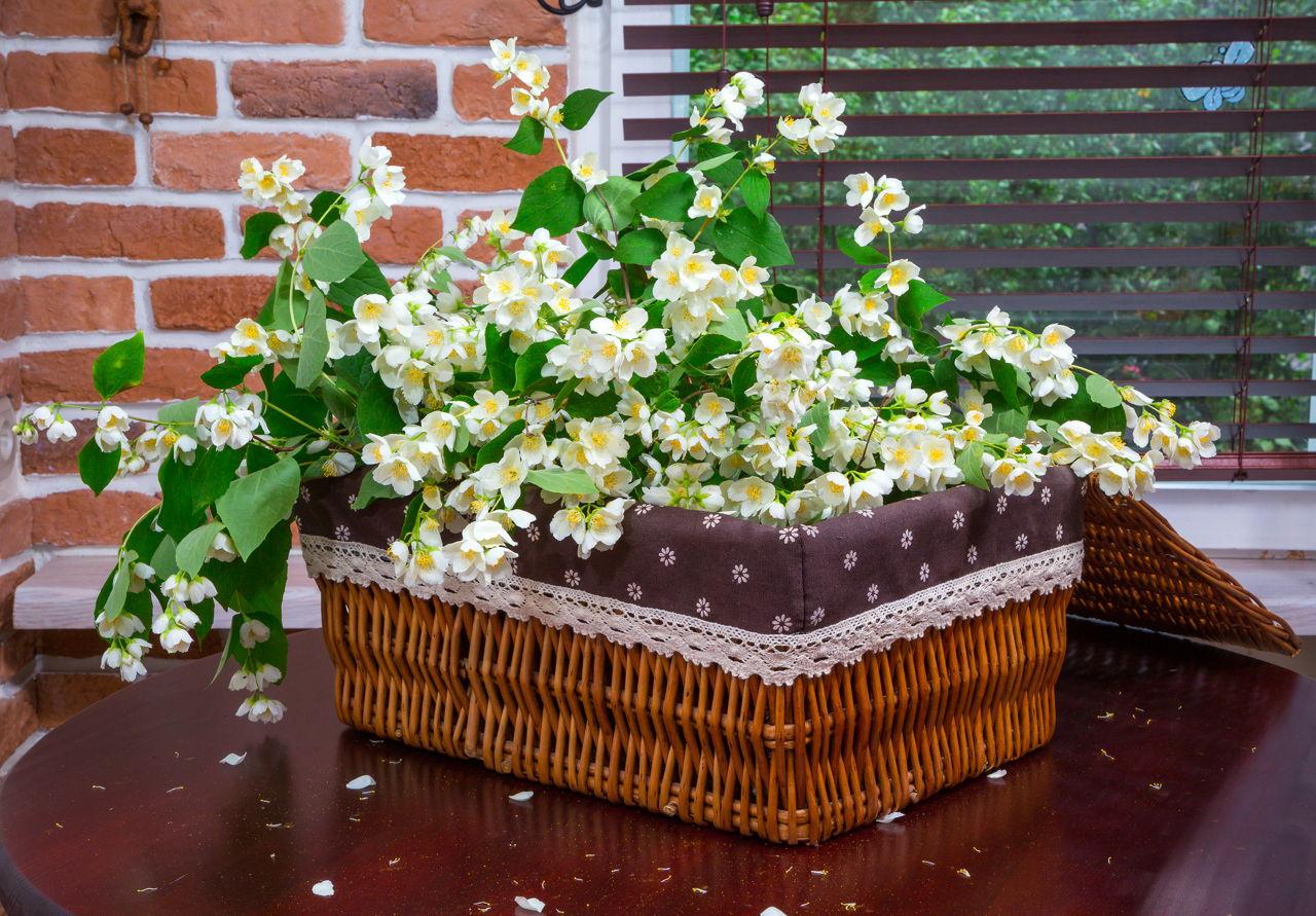 Jasmine Plant Care Learn How To Properly Grow A Jasmine Bush