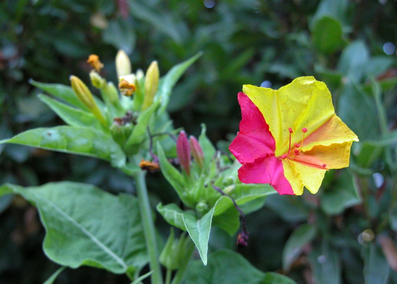 A Stunning List Of Jasmine Plant Varieties