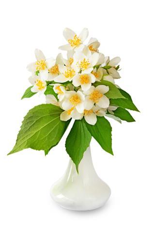 Jasmine Flowers In Vase
