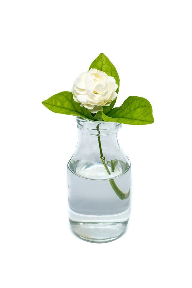 Jasmine Flower