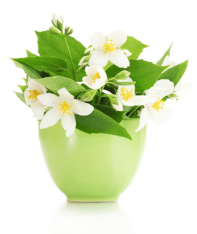 Beautiful Jasmine Flowers In Vase