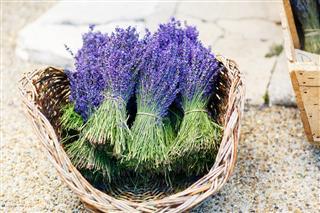 Lavender In Shop