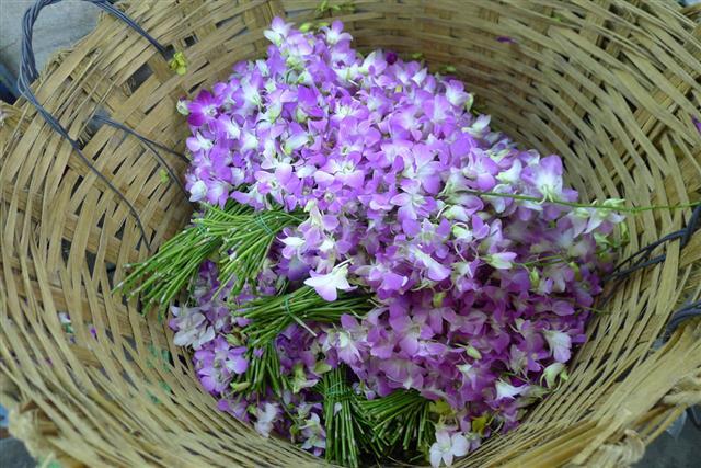 Orchids At Flower Market Bangkok