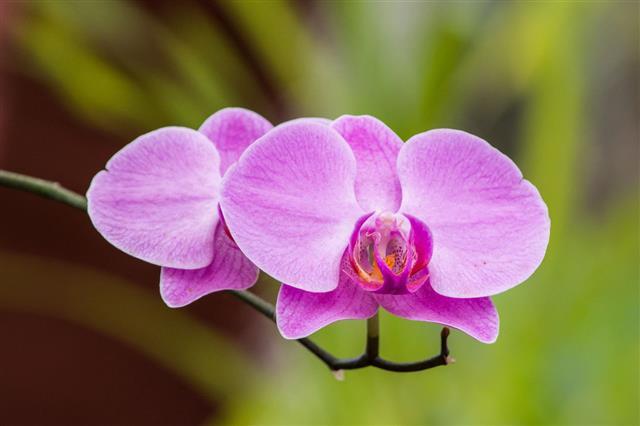 Orchids Of Sri Lanka