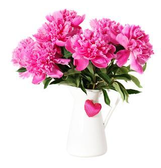 Pink Peony Flowers In Vase
