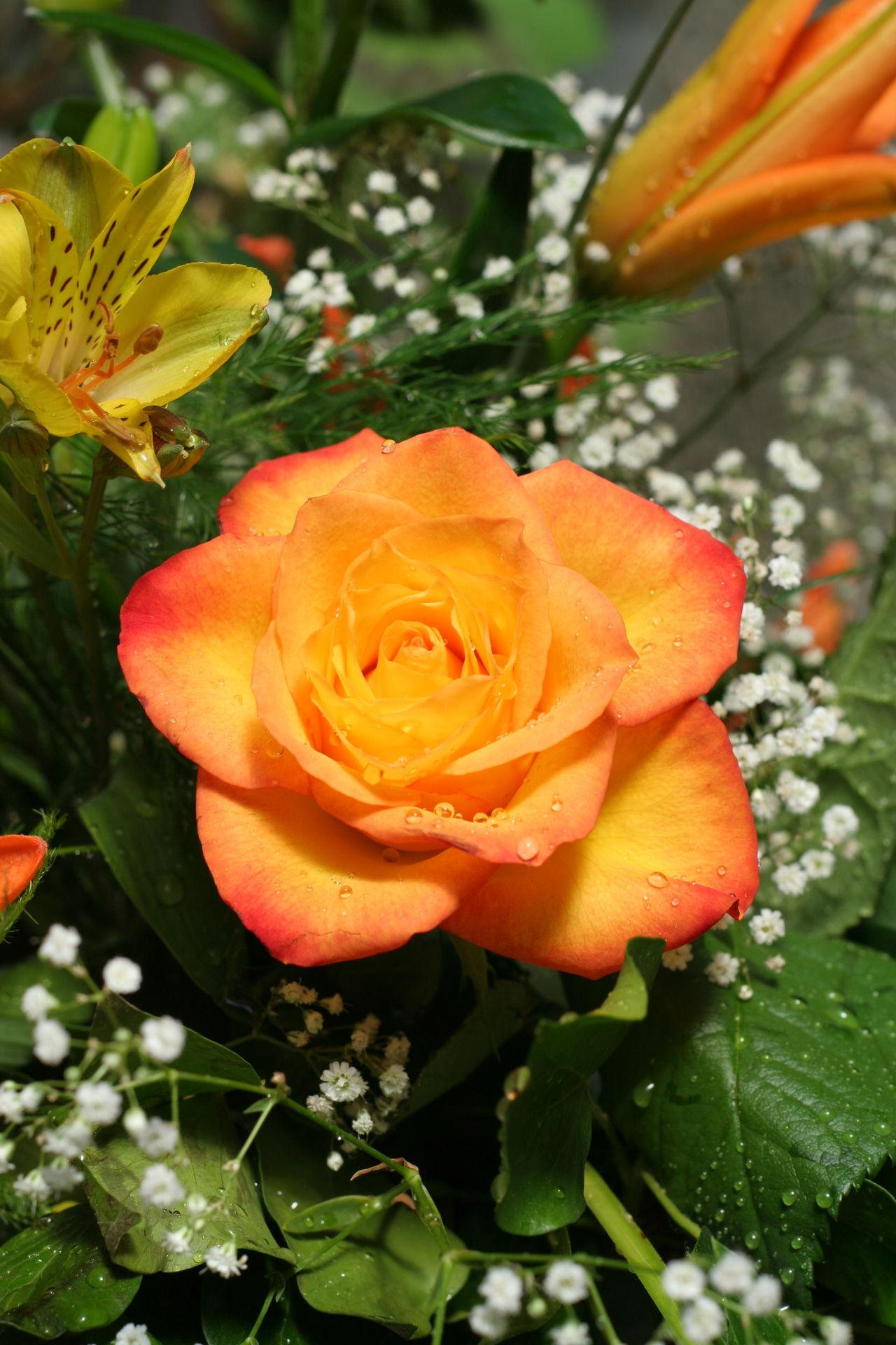 5 Outrageously Helpful Tips On Taking Care Of Floribunda Roses