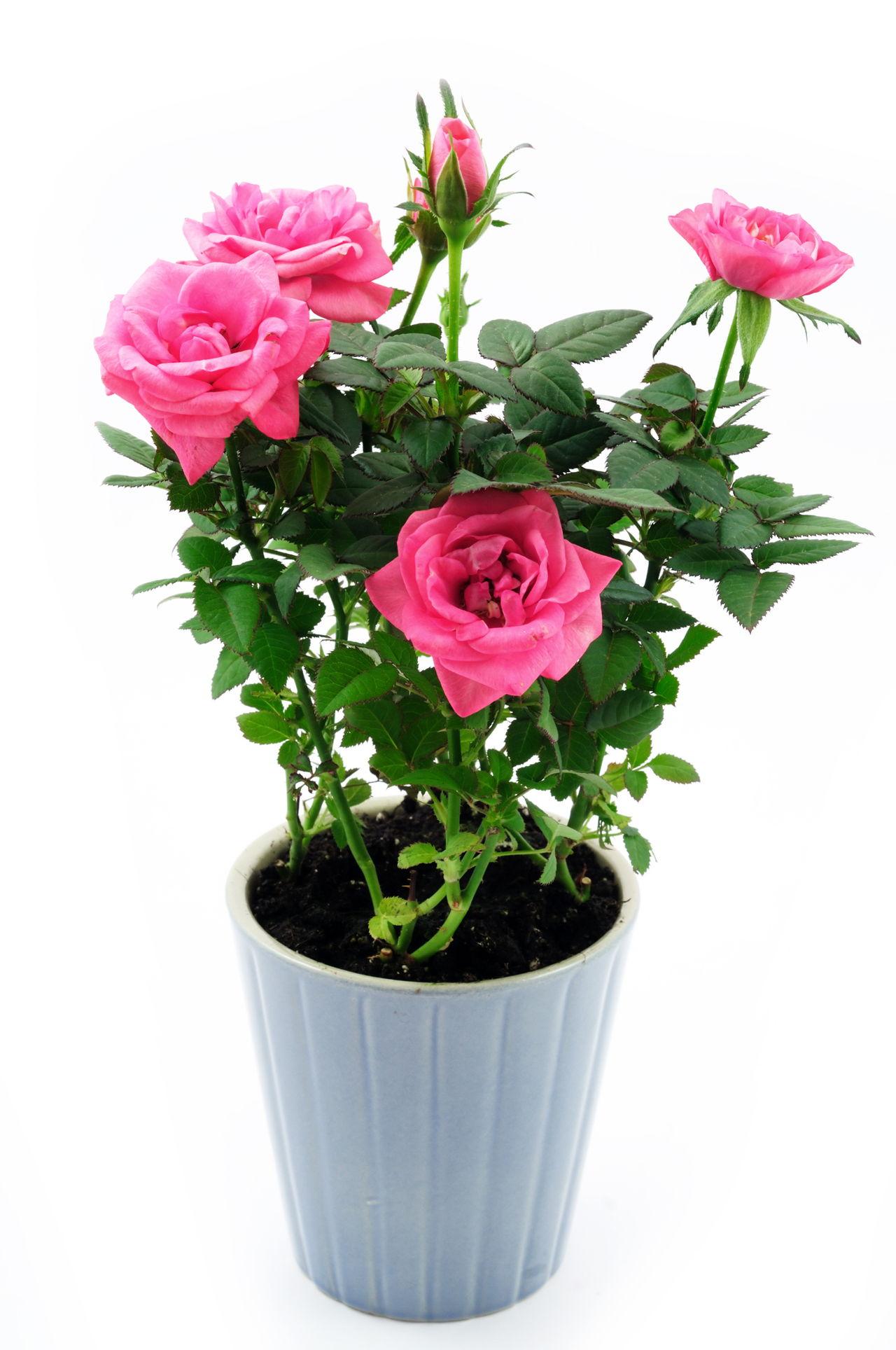 Gardener S Delight Flowering Bushes Shrubs And Trees