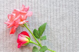 Rose Flower On Valentine