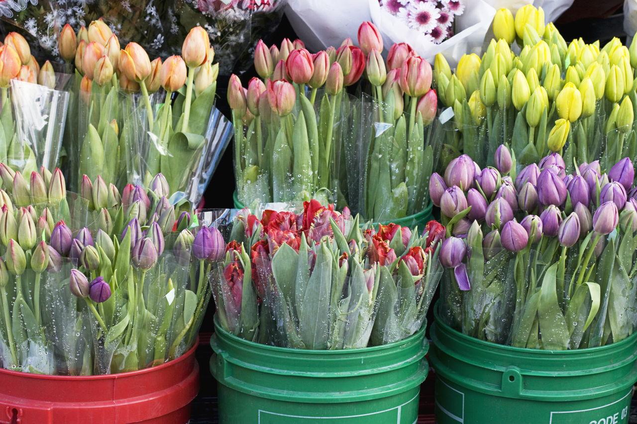 Flower Shop Name Ideas