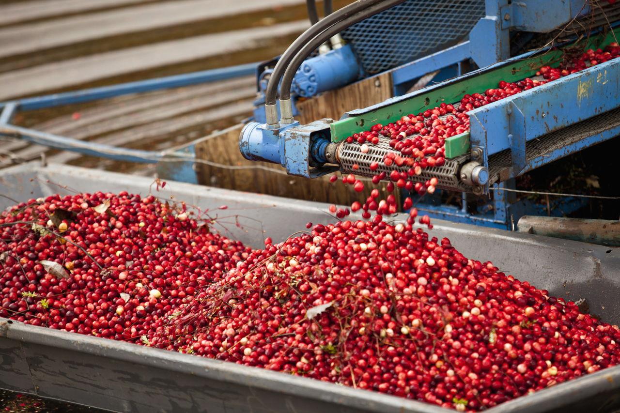 Can Cranberry Juice Cure a UTI?