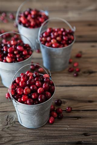 Cranberry Buckets