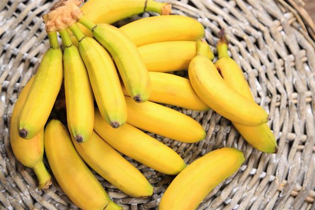 Bunch Of Mini Bananas
